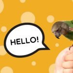 How long does it take to teach a parrot to talk?