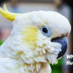 Why Do Birds Fluff Up Their Feathers