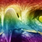 Can Birds see color?
