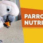 parrot nutrition