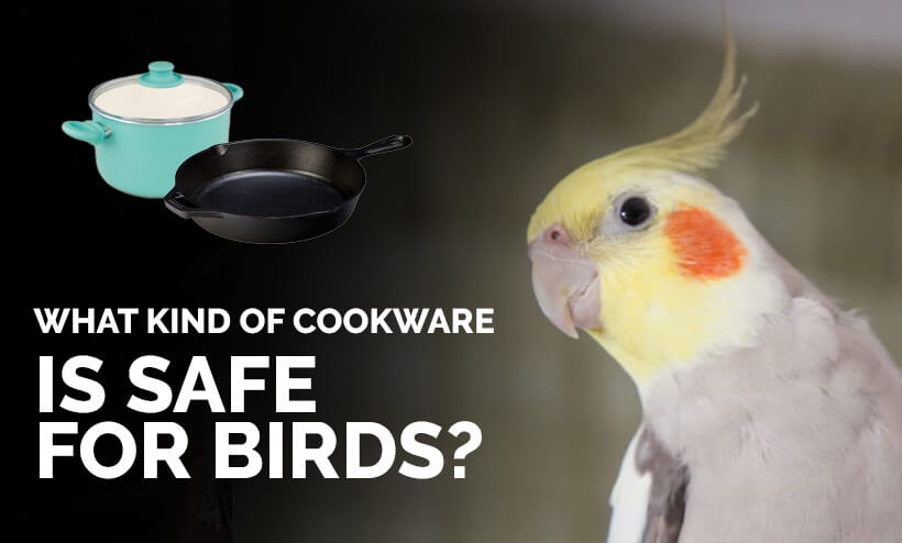 What kind of cookware is safe for birds