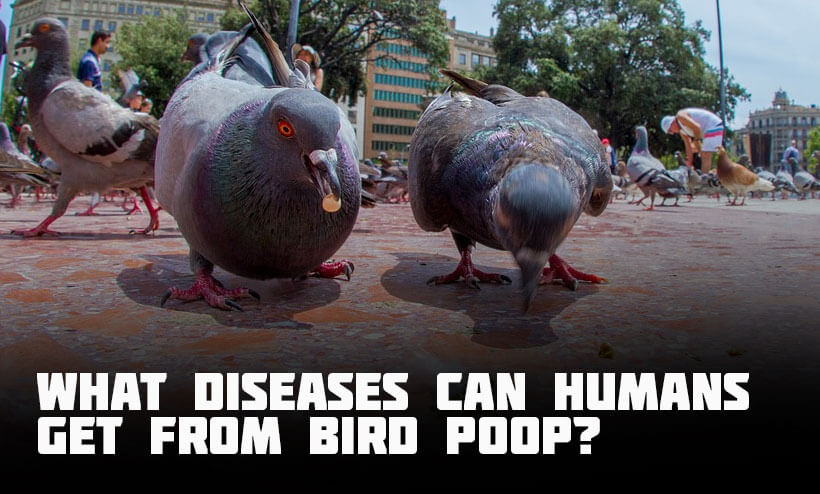 what diseases can humans get from bird poop